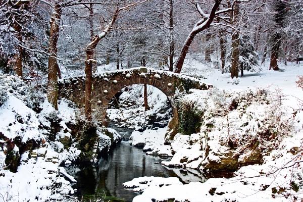 Foleys in Snow by Porthos