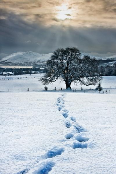 Winter Footprints by Porthos