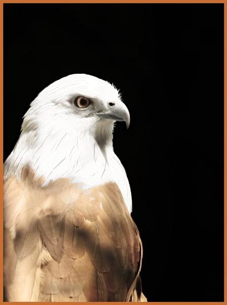 Eagle by rajishravi