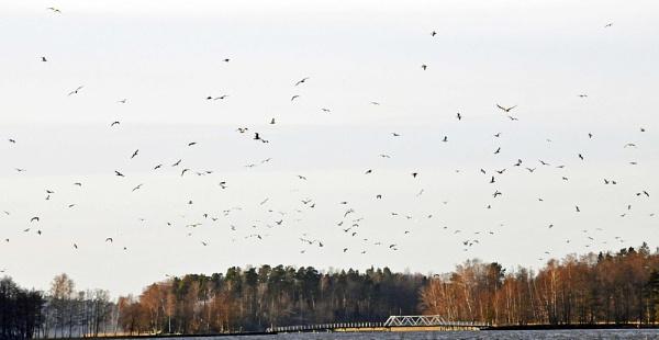 Birds. by kuvailija