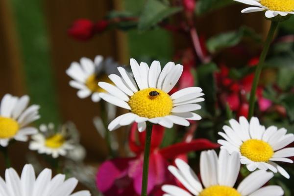 Flowerbug by Plunketfilm