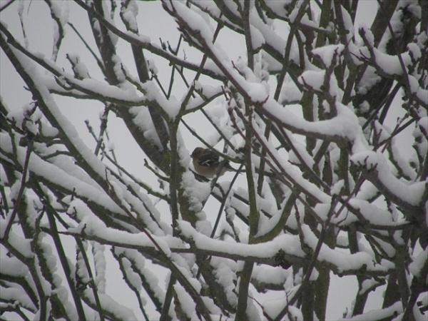 Snow Bird by voyger1010