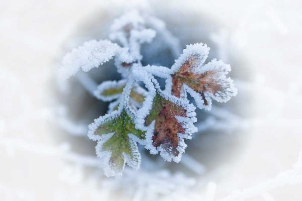 Winter Leaf by dcash29