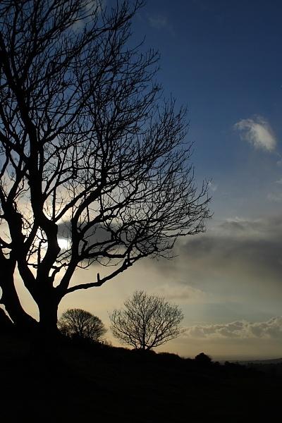 Xmas trees by nickfrog