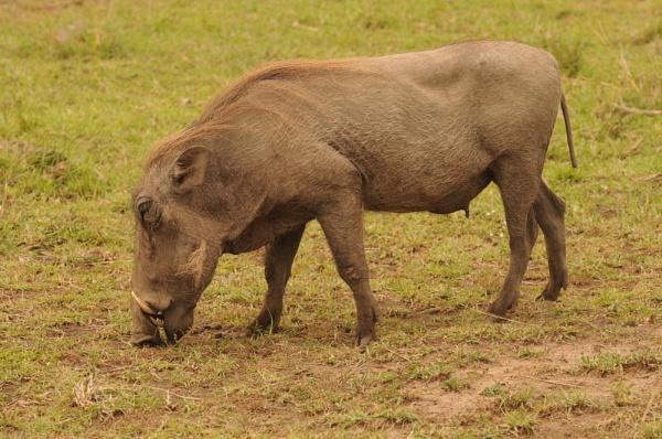 Warthog by HP1485