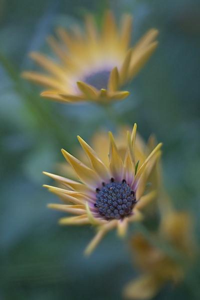 yellow flower by EddieDaisy