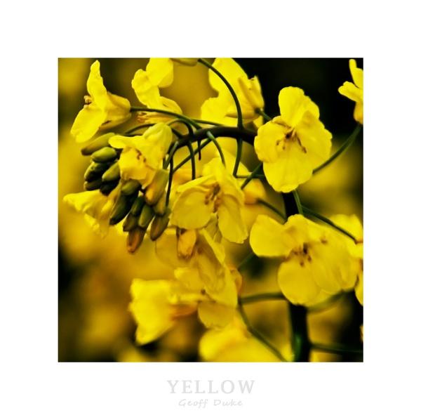 Yellow by GeoffDuke