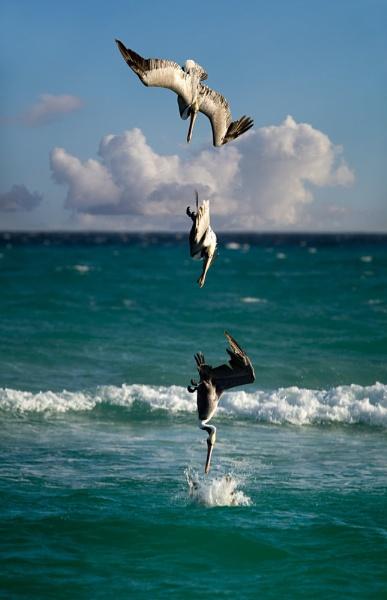 Pelican Splash by bigtench