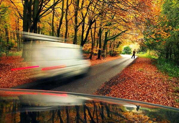 Woodland Dash by appysnappy