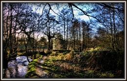 Woodland wonderland...