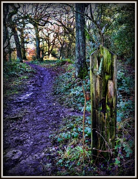 Woodland walk. by staff_junior