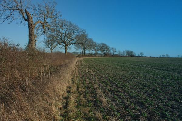 Bozeat Fields by ambercat