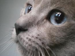 Full Face of Thomas.