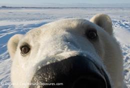 Peek A Boo Bear - D107409