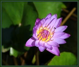 Flower in wild