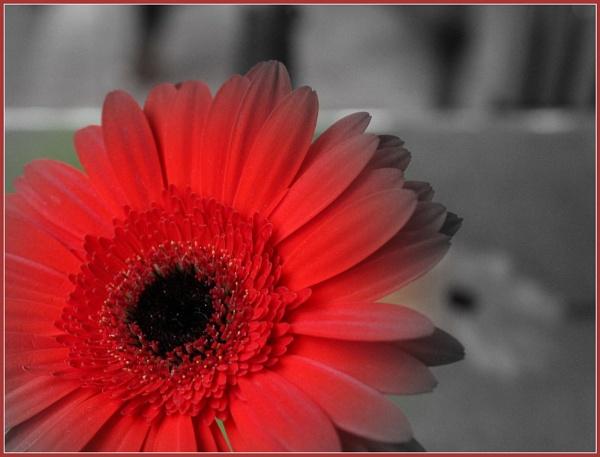 A Red Flower by santosh275