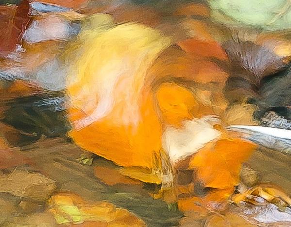 Leaf in Stream by thatmanbrian