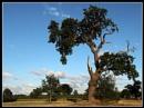 Tree by Steffen1209