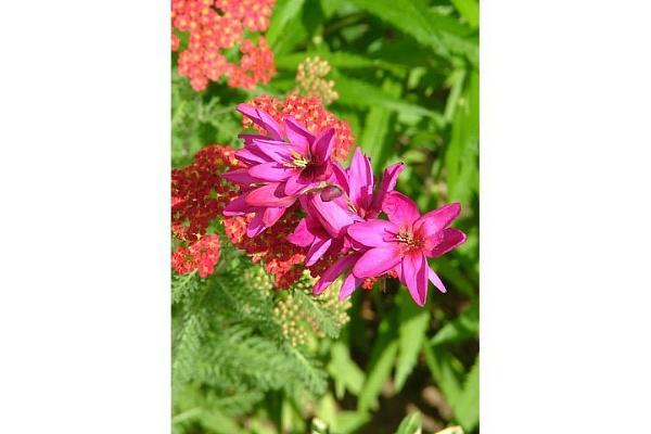 garden flowers by cptdaniel