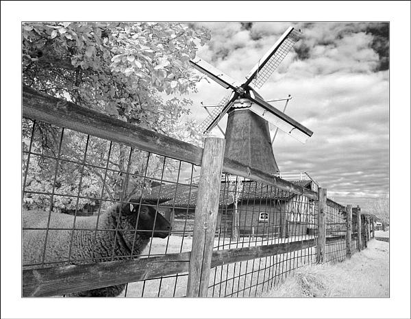 Sheep & Mill by conrad