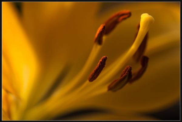 Warm Glow by Morpyre