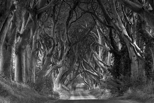 Dark Hedges, Armoy, Co Antrim by Paul1