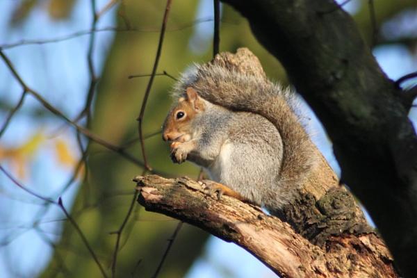 Squirrel tree by mio2mio