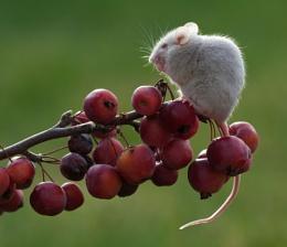 Winters Berries