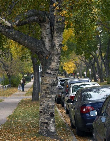 Fall Avenue by sjelect