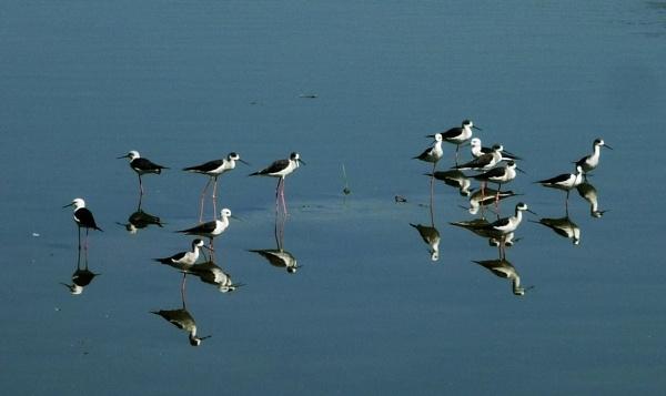 Reflection-2 by bglimaye