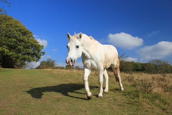 White horse by Steve2rhino