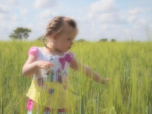 Cornfields by janiekinns