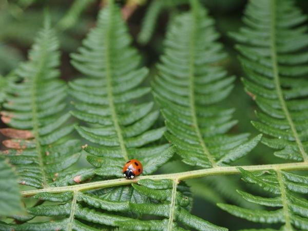 Lonely Ladybug by janiekinns