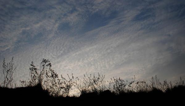 skyline by caisiimao
