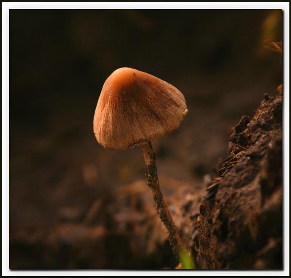 Winter mushroom by Heffo1