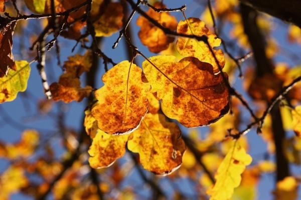 AutumnÂ's Spell by jadaszek