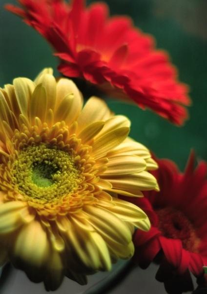 Flowers in kitchen by steveowea