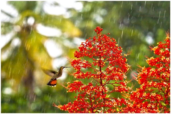 a little bird in a big world. by idl