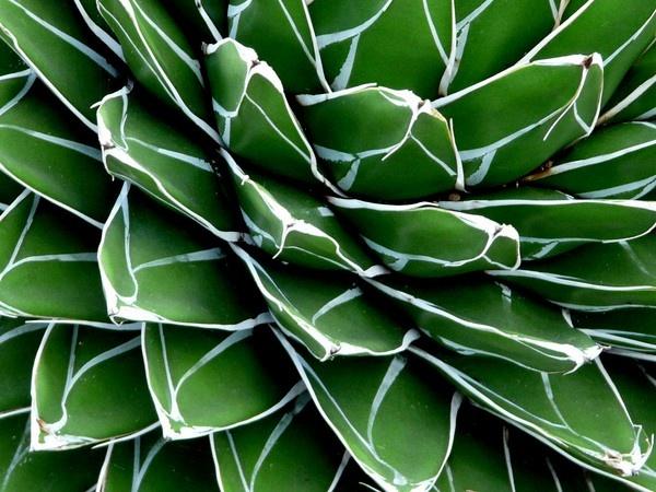 Botanics Abstract by Philip_H