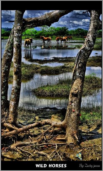 SUMBAWA NTB INDONESIA by zacky