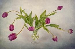 Wayward Tulips
