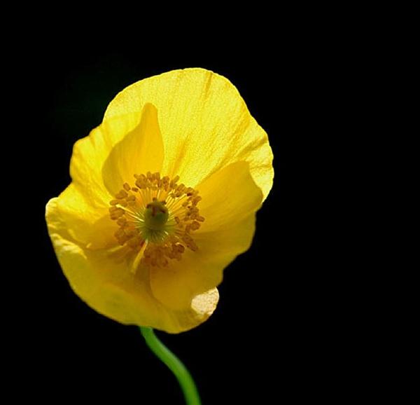 Garden Flower by paulb20