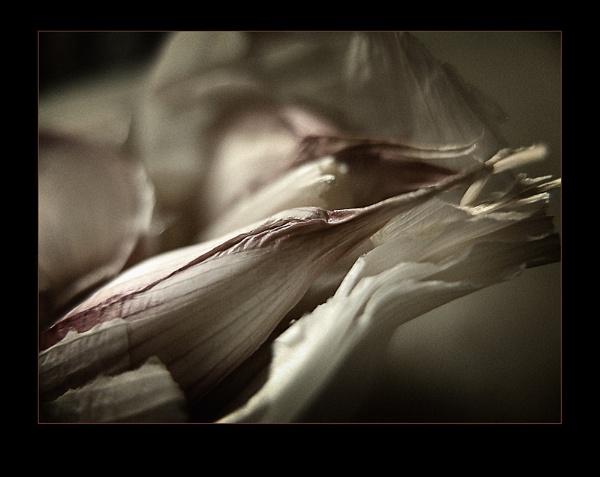 Garlic by timbo