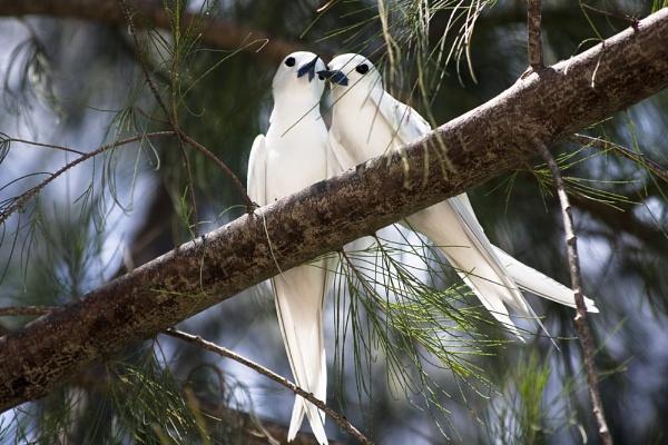 Lovebirds by nworb