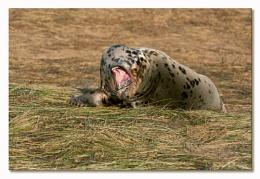 Wannabe a Leopard .........