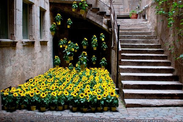 Flower Power, Barcelona, Spain by Paul1