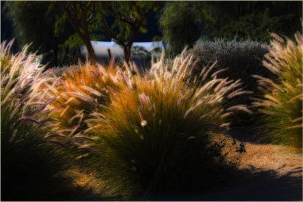 Sunlit Grasses by Daisymaye