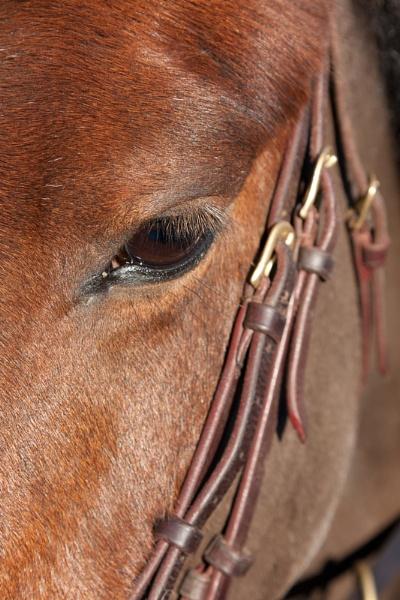Horses Eye by Merlin_k