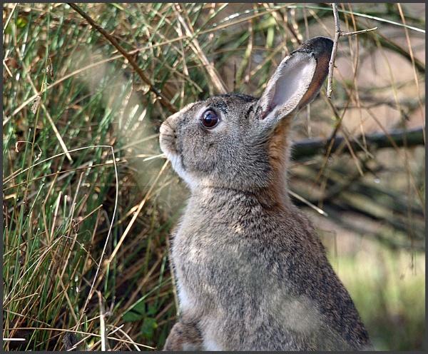 Brer  Rabbit by f8