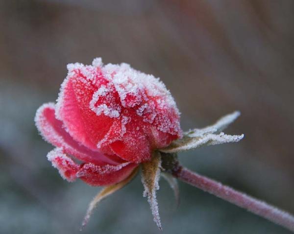 Frozen Pleasure by NDODS